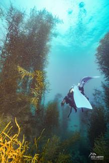 [2021년 3월] 제주도 비양도 모자반숲 다이빙