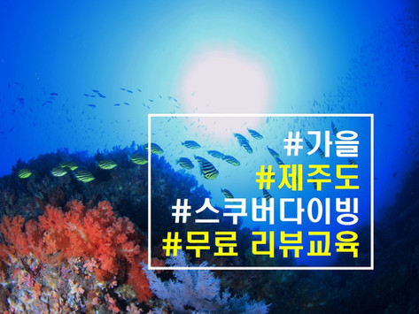 [2019 9월] 무료 스쿠버 리뷰교육 + 제주도 다이빙 여행