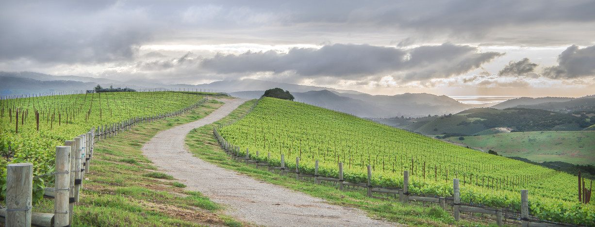 Albatross Ridge Vineyards by Manny Espin