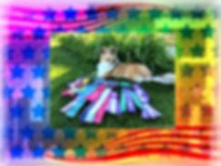 Scottish collie,  Collie, Scotch collie vs. scottish collie, Smooth collie, Scotch collie puppy, Scottish collie puppy, Border collie, Farm collie, Scottish collie temperament, Scotch collie temperament, Old time Scotch collie temperament, Types of collies, Gracehaven collies, Scottish collies for sale, Rough scottish collies for sale, Pictures of Scottish collies, Scottish collies for sale in Montana, Scottish Collies for sale in Minnesota, Scottish Collies for sale in Pennsylvania, Old Scottish Collies, www.scottishcollies.org, www.scottishcolliepreservationsociety.org , Wind Whispers Farm,  Wind Whispers Farm Scottish Collies, Rhein Scottish Collies, Planet K9 Scottish Collies, Montana Scottish Collies, Scottish farm collie, Scotch collie, Old time scotch collie,  Classic farm collie, Farm collies, Outcross collie Working Collie, Smooth Farm Collie, Smooth collie puppy, Smooth Scottish Collie, Scottish Working Collie,