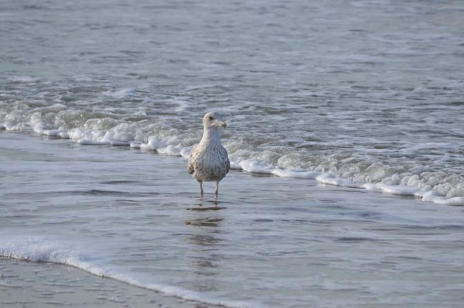Meeuw op het strand