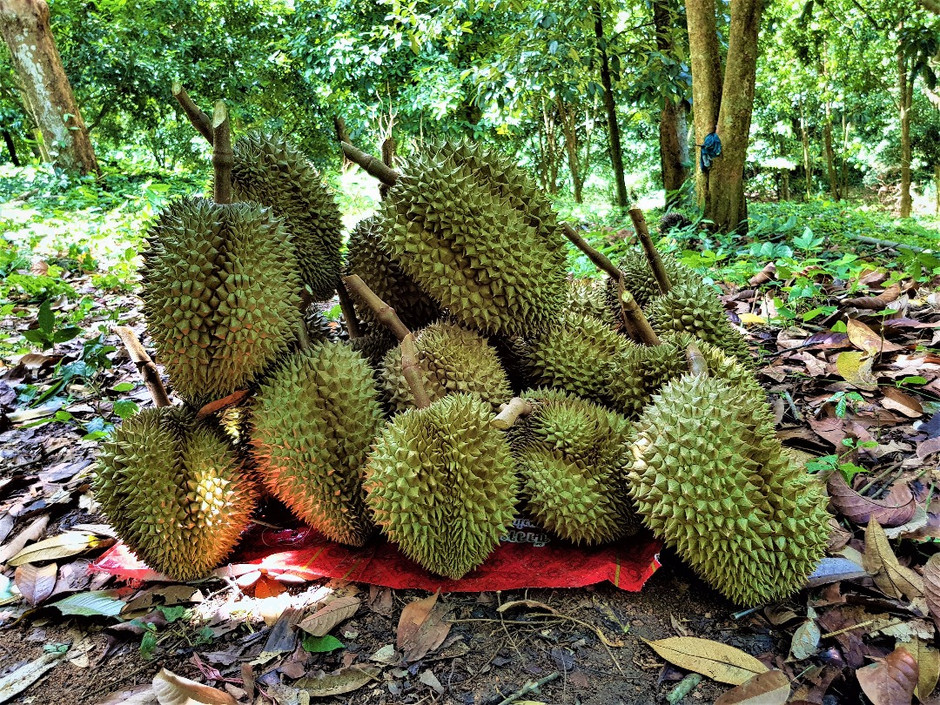Don't Invest In Gold, Put Your Money In Durian
