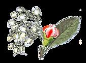 Ilustrado Rose Bud