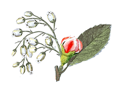 Illustrated Rose Bud