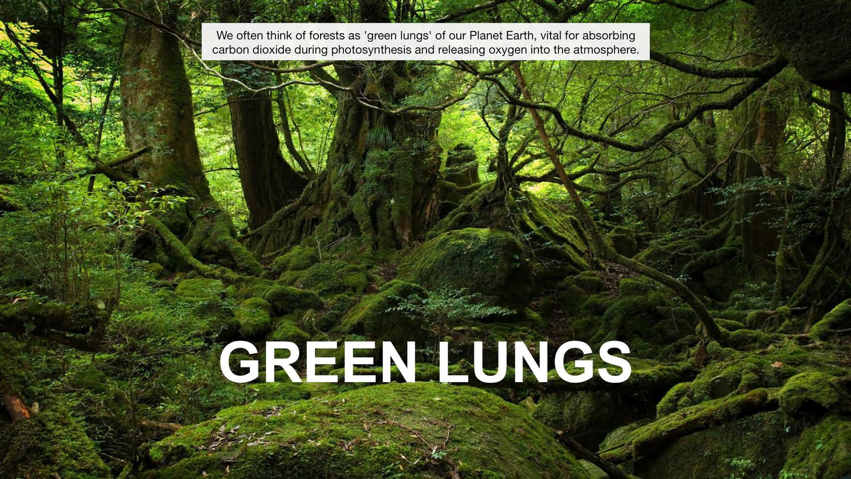GREEN-AIR-HOTEL_EN14.jpg