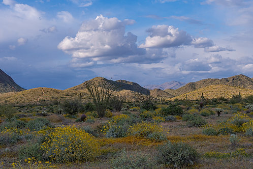"""Gavilan Peak and Daisy Mountain"""