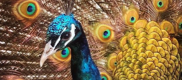 Sedona Art Gallery 01 - web.jpg