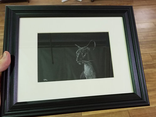 Charcoal Cat Drawing
