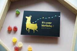 alpaca my present