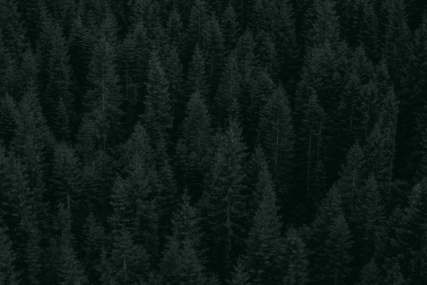 Sarah-Site-Background-SM_edited.jpg