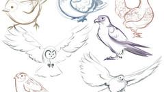 BIRDS3-28.jpg