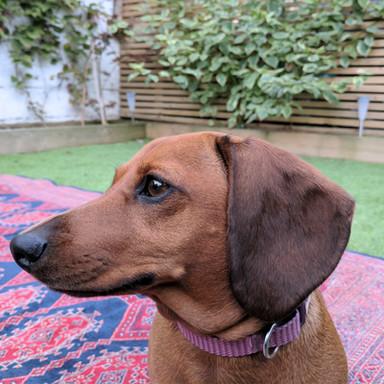 Poppy | Barking Manager