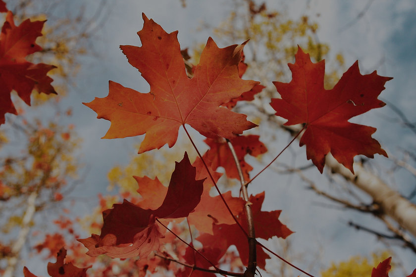 Fall%20Leaves_edited.jpg