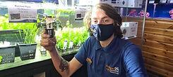 Aquarium Plant Freshwater Staff Invernes