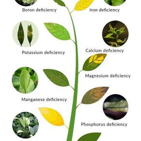 Understanding Aquarium Plant Basics