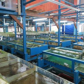 South East Asia Buying Trip – Bali Fish