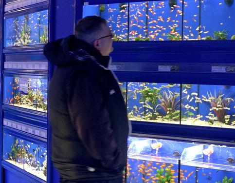 PW_Fish keeper Scotland Dunfermline_43_e