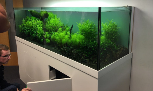 Large planted aquarium inside the JBL offices