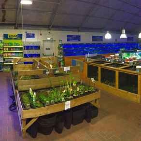 Fishkeeper Inverness is now re-open as an essential retailer