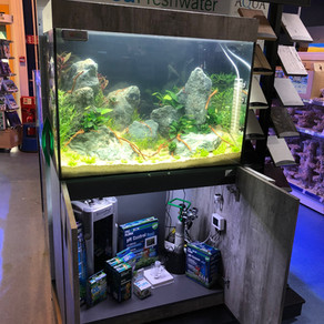 eaFreshwater 900 Aquascape