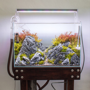 Aquascaping - The Art of Underwater Landscaping