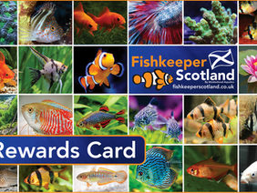 Fishkeeper Rewards December Offer