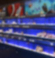PW_Fishkeeper Braehead_5.JPG