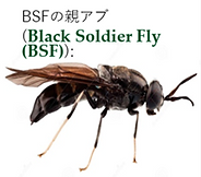 BSF.png