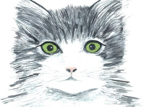 Green Eyed Kitten