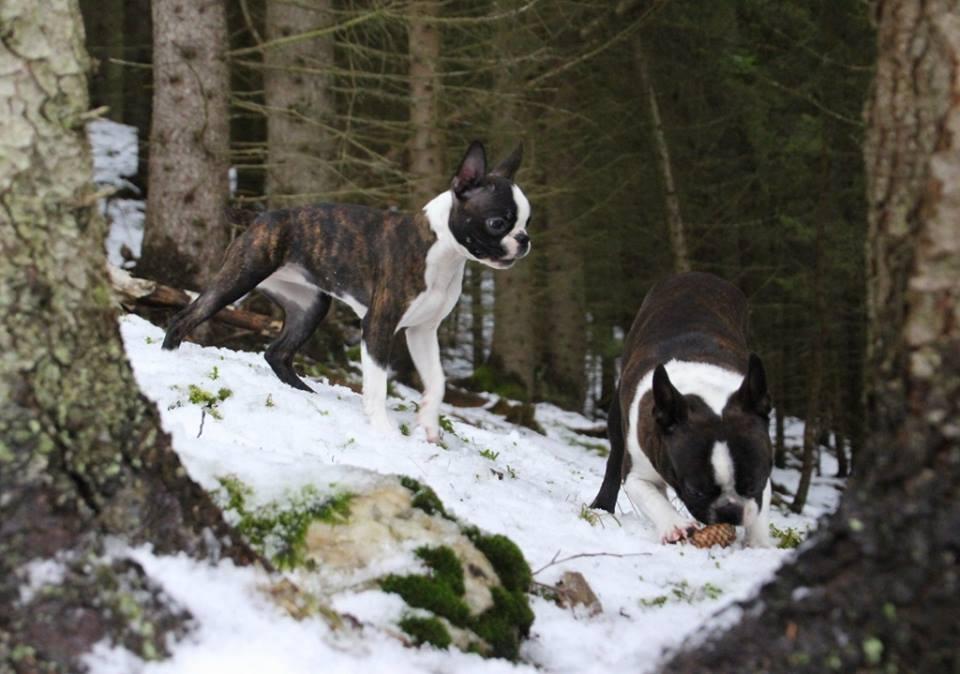 Maiken in the woods