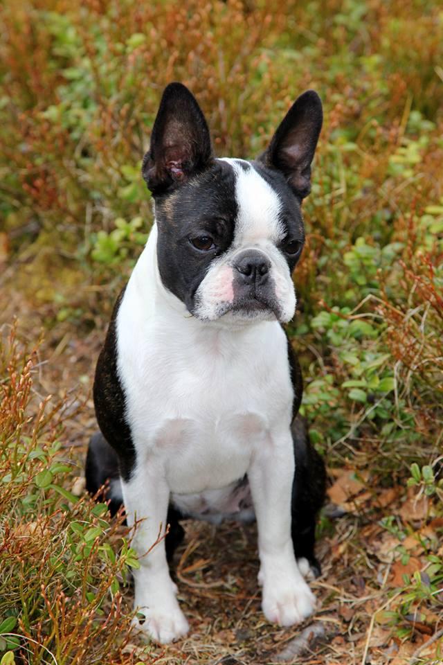 Perle as a puppy