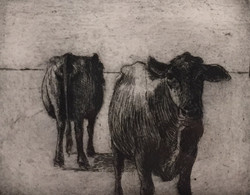 Cow; Cow