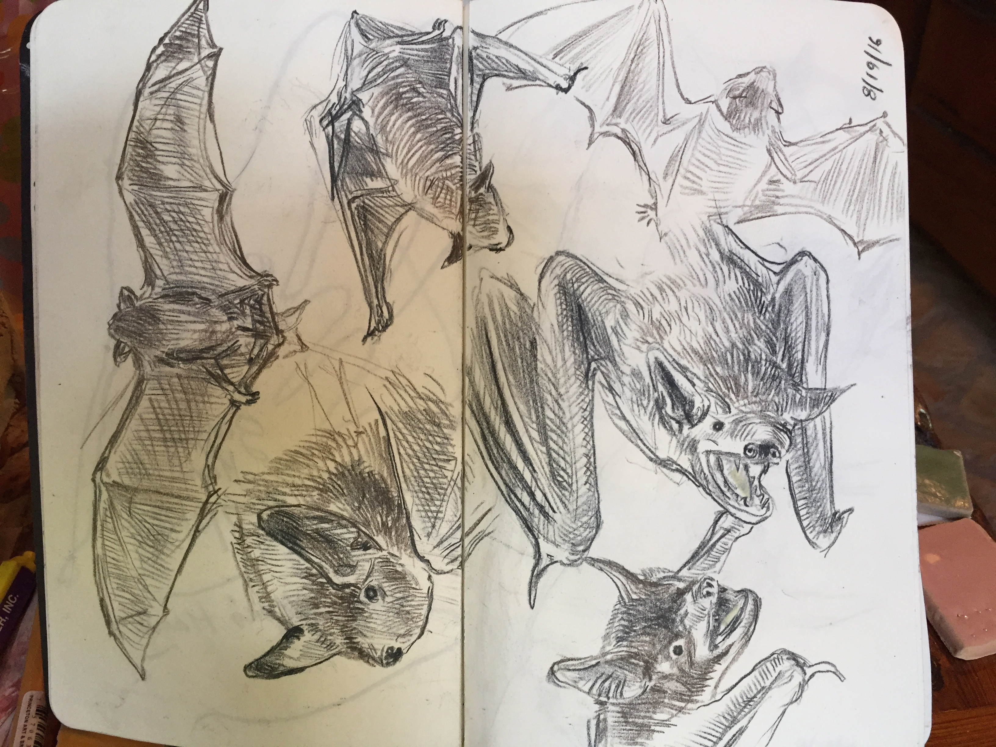 Bat Studies II