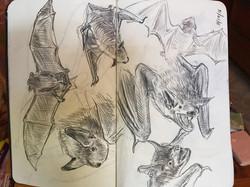 Bat Studies II