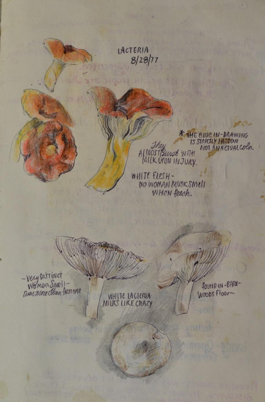 Mushroom Studies