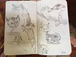 Bat Studies I