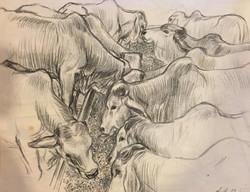 Bulls at the Trough