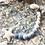 Thumbnail: Dummy Clip / Pacifier Chain LOLLIPOP - Blue