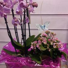 CESTA orquidea y planta_