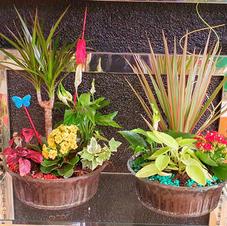 centros cristal plantas variadas