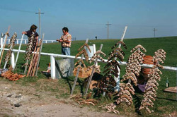 La Perouse 1975