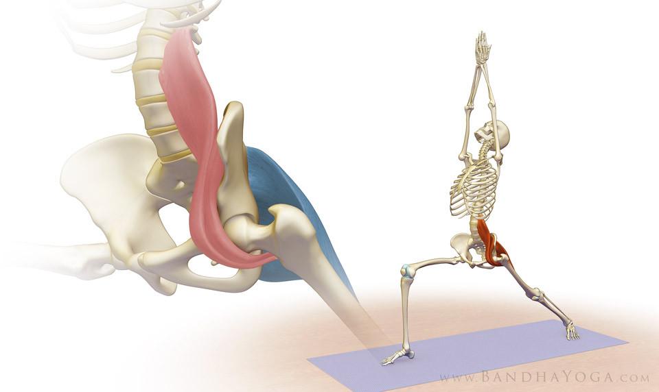 El Musculo Psoas