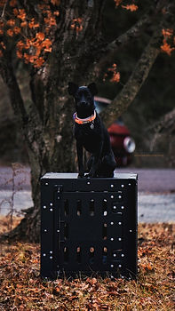 Ultra with her KBC kennel