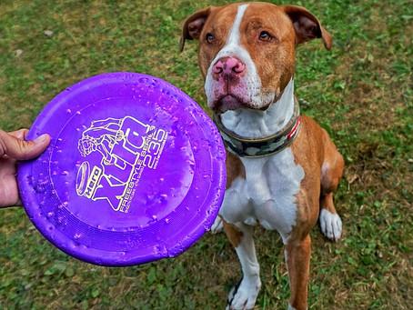 Hablemos de discos para perros.