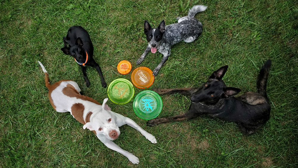 Hero Disc USA has discs for any size dog!