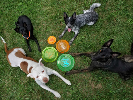 How to pick the right disc for your dog.
