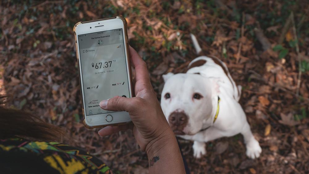 RV pet safety app