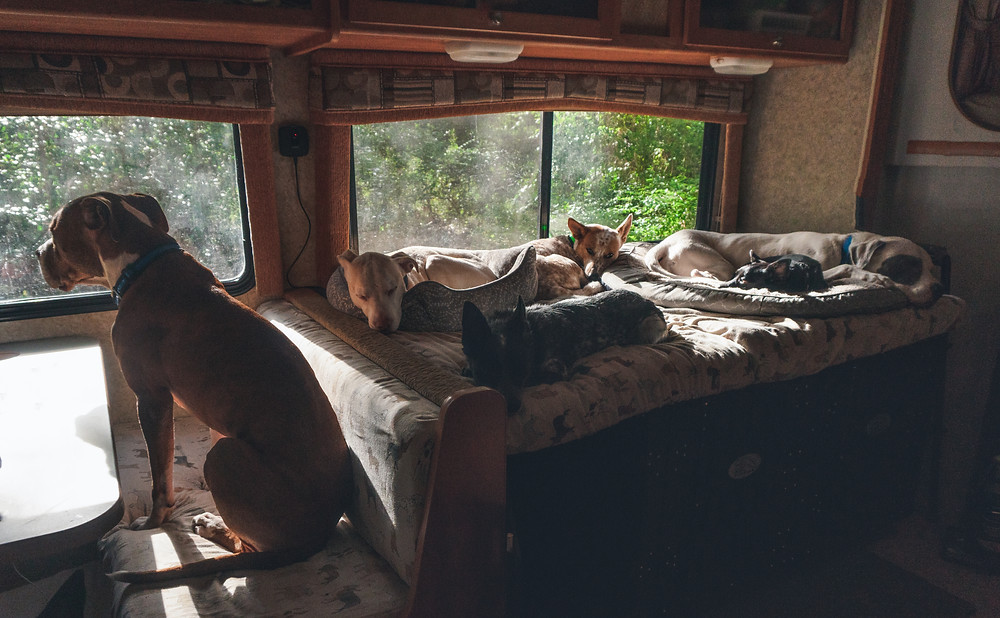 All is good in the RV