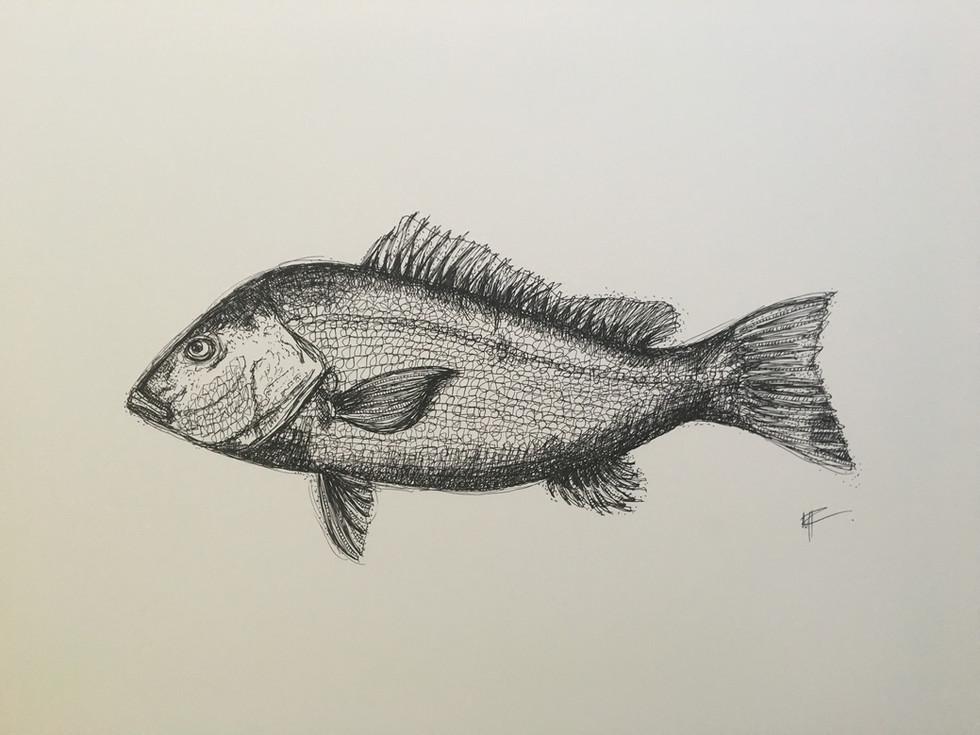 Fishfinal.jpg