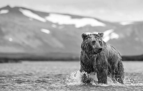 Postcard from Alaska